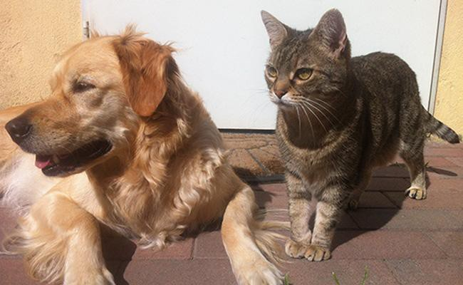 how-to-determine-whether-your-pet-has-become-old-or-not