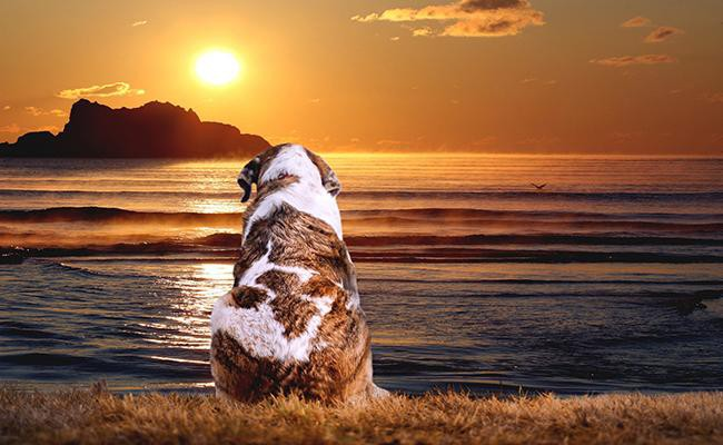 management-of-sundowning-in-dogs