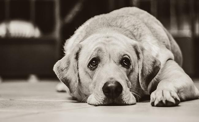 what-is-separation-anxiety-canine-style