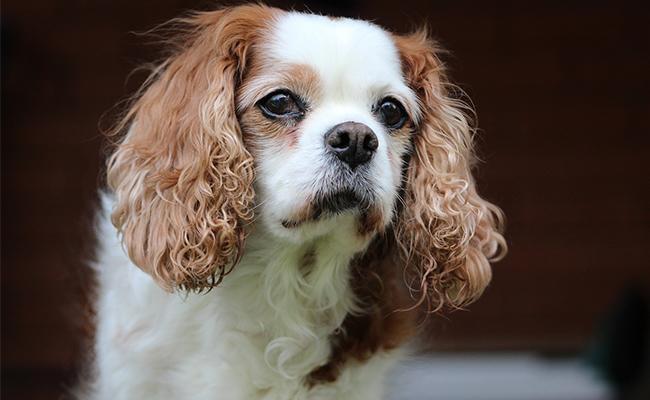 small-female-dog-names