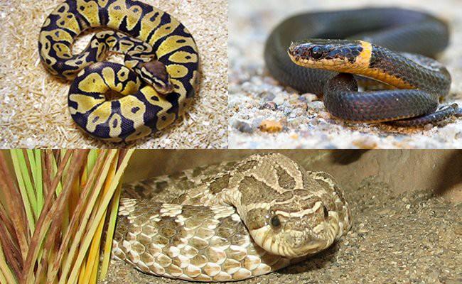 smallest-pet-snakes - Snake Pets