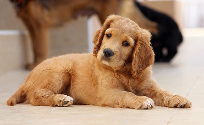 unique-brown-dog-names
