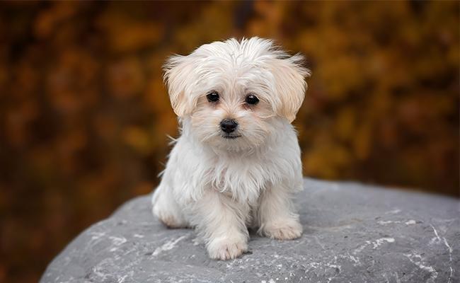 unique-dog-names-female