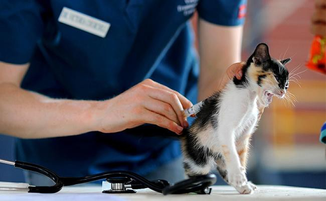 how-do-vets-test-for-uti-in-cats