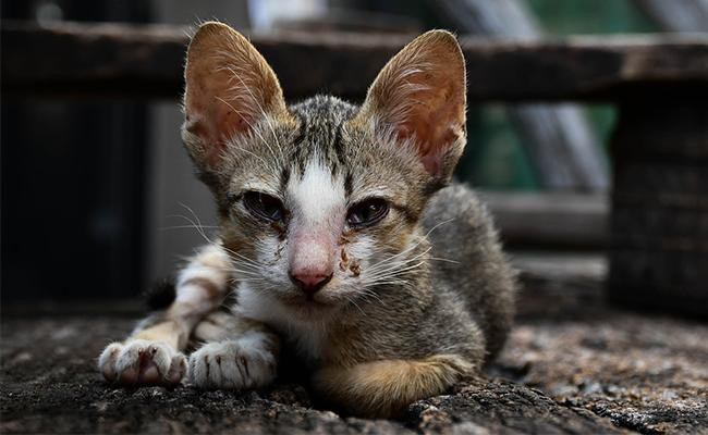 what-causes-uti-in-cats