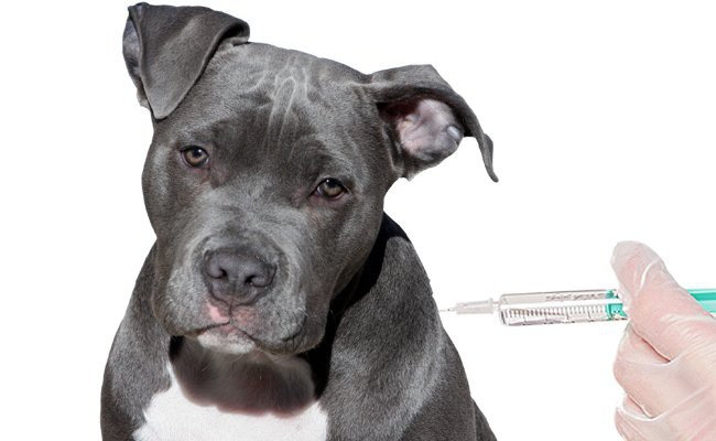 vaccination-in-dogs - Vaccination In Pets