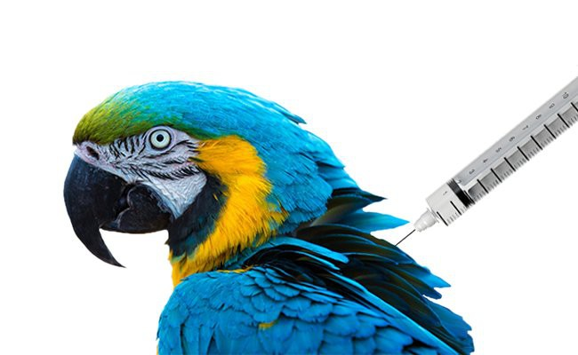 vaccinations-for-birds - Vaccination In Pets