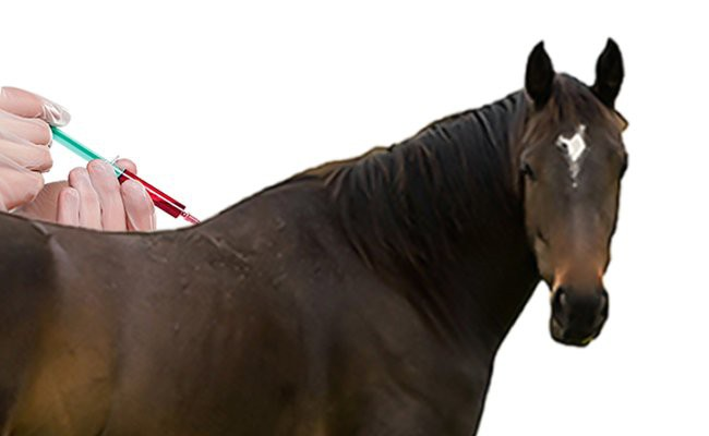 vaccinations-for-horse - Vaccination In Pets