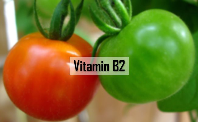 vitamin-b2-vitamins-for-dogs