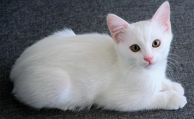 unique-white-cat-names