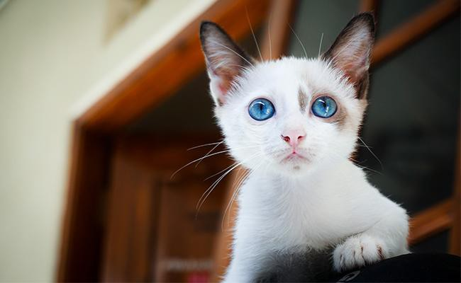 white-cat-names-with-blue-eyes