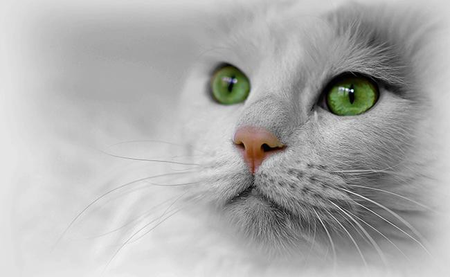 white-cat-names-with-green-eyes