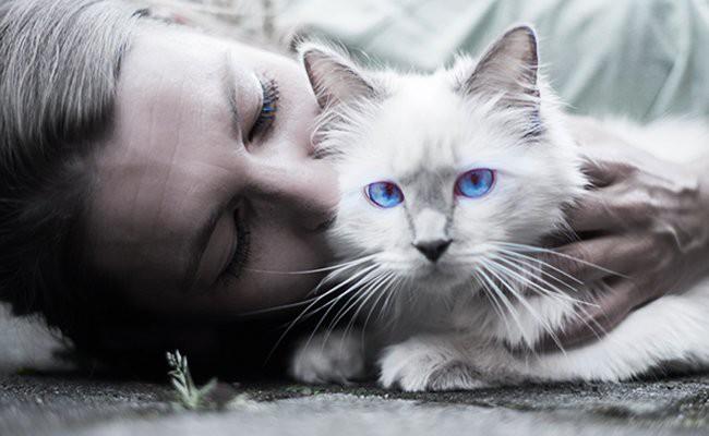 white-cat-care - White Cat
