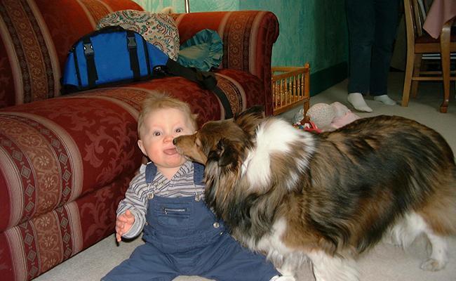 why-vets-say-no-to-dog-licking