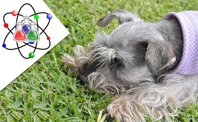 science-dogs-and-grass