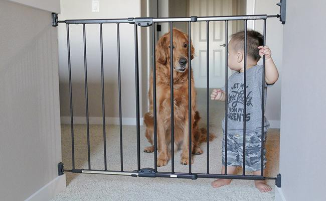 security - Why Pets Are Good For You?