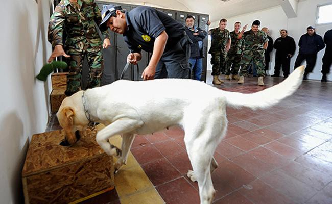 detection-dogs-working-dogs