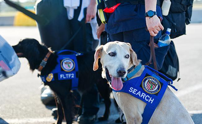 search-and-rescue-dogs-working-dogs