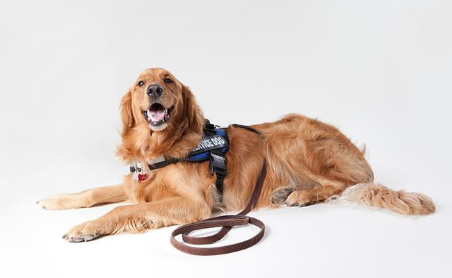 service-dogs-working-dogs